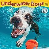 Underwater Dogs – Hunde unter Wasser 2021 - 16-Monatskalender: Original BrownTrout-Kalender [Mehrsprachig] [Kalender] (Wall-Kalender)